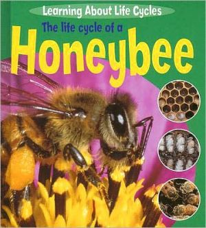 The Life Cycle of a Honeybee book written by Ruth Thomson