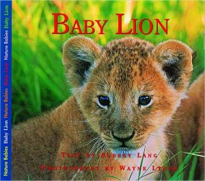 Baby Lion book written by Aubrey Lang
