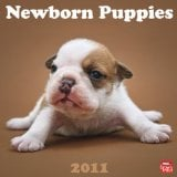 2011 Newborn Puppies Square Wall Calendar book written by BrownTrout Publishers