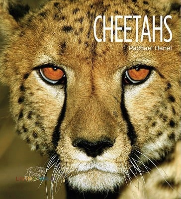 Cheetahs book written by Rachael Hanel