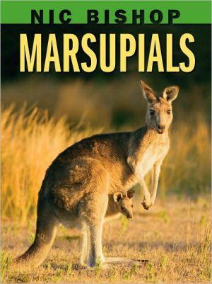 Marsupials book written by Nic Bishop