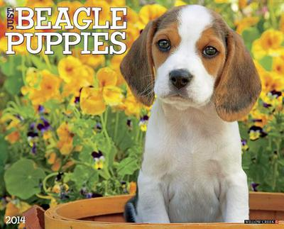 Beagle Puppies Wall Calendar book written by Not Available (NA)