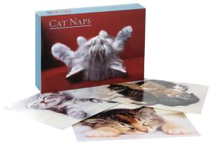 Cat Naps Boxed Cards Set of 16 book written by Ronnie Sellers Productions