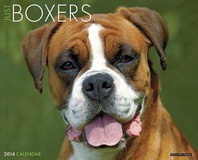 Boxers Wall Calendar book written by Not Available (NA)