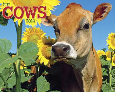 Cows Wall Calendar book written by Not Available (NA)