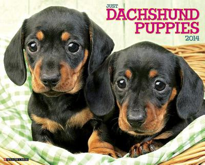 Dachshund Puppies Wall Calendar book written by Not Available (NA)