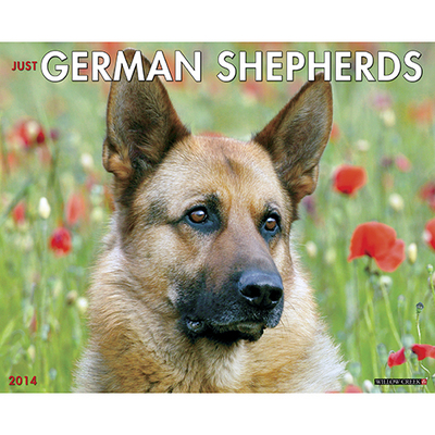 German Shepherds Wall Calendar book written by Not Available (NA)