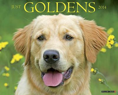 Goldens Wall Calendar book written by Not Available (NA)