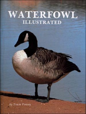 Waterfowl Illustrated book written by Tricia Veasey
