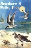Seashore and Wading Birds of Florida book written by Patricia E. Pope
