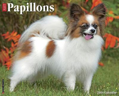 Papillons Wall Calendar book written by Not Available (NA)