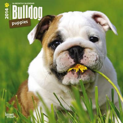 Bulldog Puppies 2014 Calendar, 18-Month Calendar book written by Browntrout Publishers