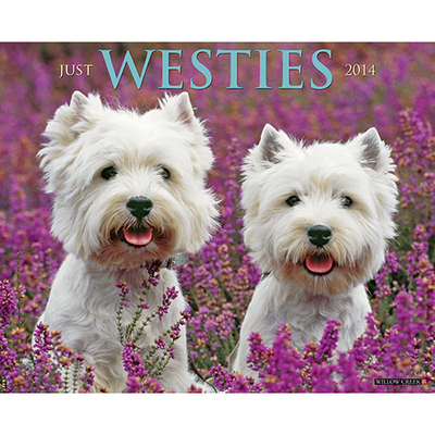 Westies Wall Calendar book written by Not Available (NA)