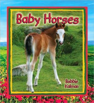 Baby Horses book written by Bobbie Kalman