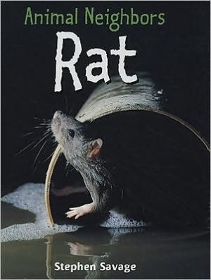 Rat book written by Stephen Savage